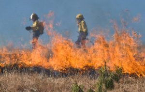 grass-burning